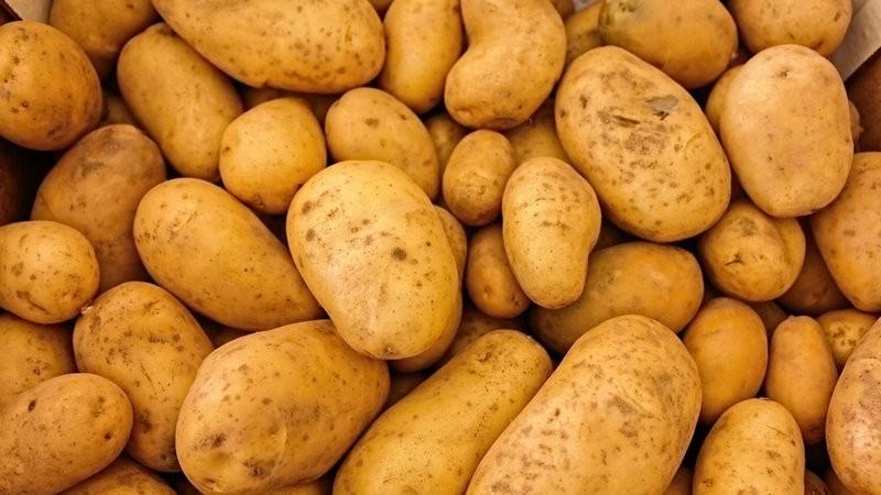 удобренный картофель
