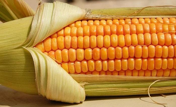 раскрытая кукуруза