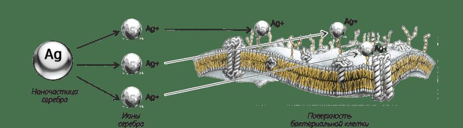 Буклет Зеребра Агро (36)